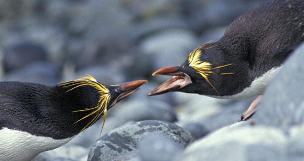 News, Penguin, Author Solutions, Scam